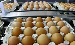 Яйца из России
