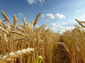 ВР Украины обещает деньги аграриям