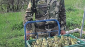 Контрабанда ДНР