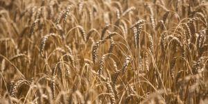 Аграрная продукция
