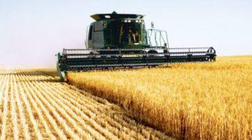 Скоро в Украине снова подорожает хлеб