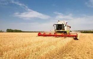 В Украине собрали рекордный урожай зерновых