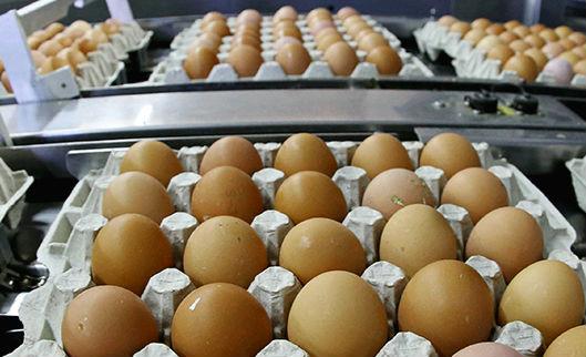 Казахстан ограничивает ввоз продуктов из России