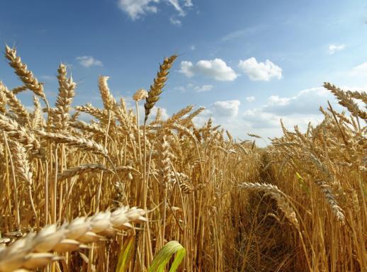 Государство окажет материальную помощь аграриям