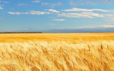 В Аграрном фонде Украины ищут способы привлечения инвестиций