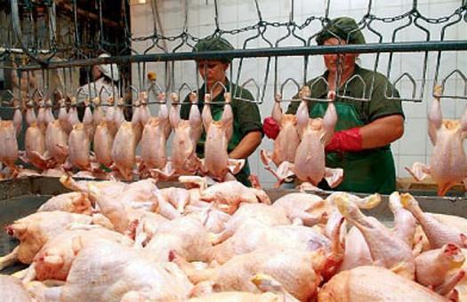 Украина стала одним из весомых поставщиков курицы в ЕС