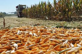 Украина укрепляет аграрные связи с Китаем