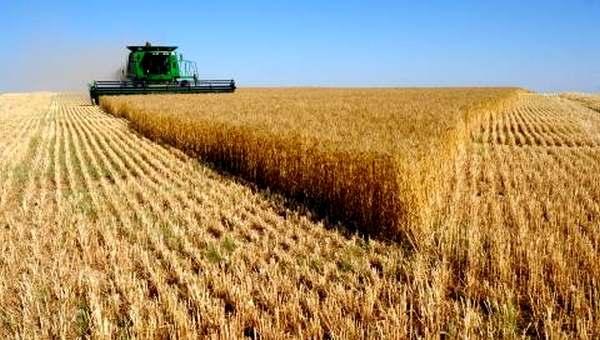 Урожай зерна в этом году превысил объемы 2014-го
