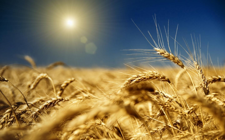 Продовольственная безопасность обеспечена, а цены растут