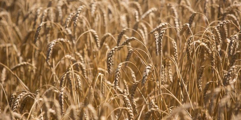 Украинские аграрии принесли в «копилку» валютной выручки более трети общей суммы