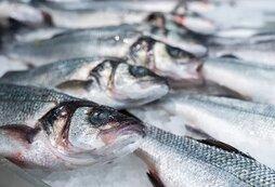 Росрыболовство согласилось выполнять требования Китая при поставках рыбы